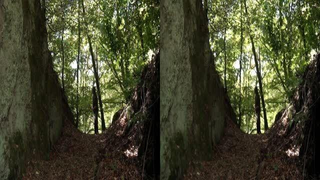 قسمت کوتاه فیلم سه بعدی Robin Hood 3D 2012