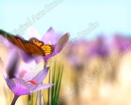 زعفران قاین - صادرات زعفران اصیل ایرانی