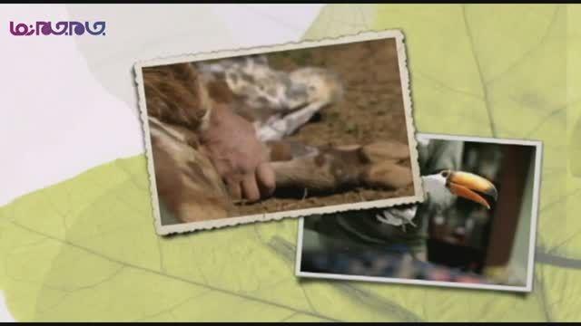 گلچین صفاسا: تکنیک جدید درمانی حیوانات+فیلم کلیپ جالب