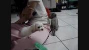 وقتی گربه سر به سر سگ میزاره