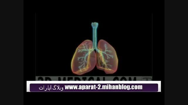 آناتومی سیستم تنفسی(سه بعدی)