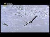 مستند دره گرگها-National Geographic Valley Of The Wolves