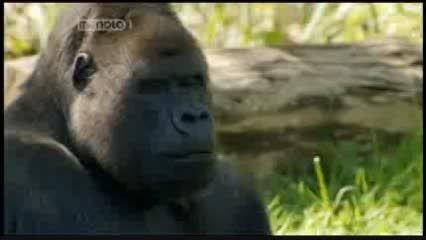 مستند از میمون تا انسان Human Ape