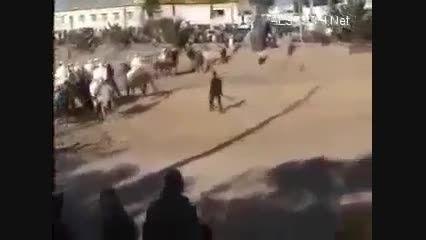 برخورد اسب با خودرو