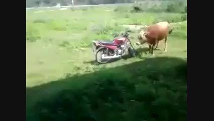 دانلود کلیپ طنز و خنده دار گاو و موتور