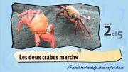 آموزش فرانسه با ویدیو 14 (زندگی دریایی 2)
