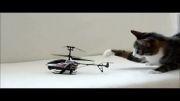 رابطه گربه ها با یک هلیکوپتر کنترلی