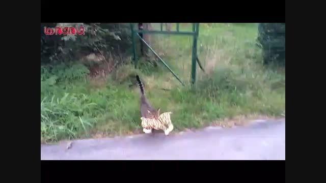 گربه عروسک دزد پیشی ملوس سارق فیلم گلچین صفاسا