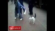 گربه شیردل