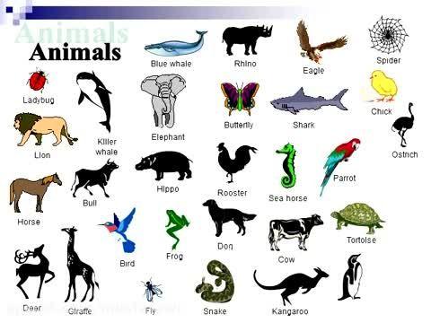 آموزش کلمات جدید زبان انگلیسی (نام حیوانات)