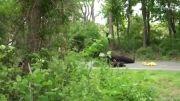 دوربین مخفی - Prank - حمله میمون