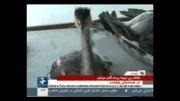 کشتار بی رحمانه پرندگان مهاجر در فریدونکنار92
