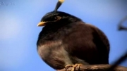 angry birds در دنیای واقعی!!!