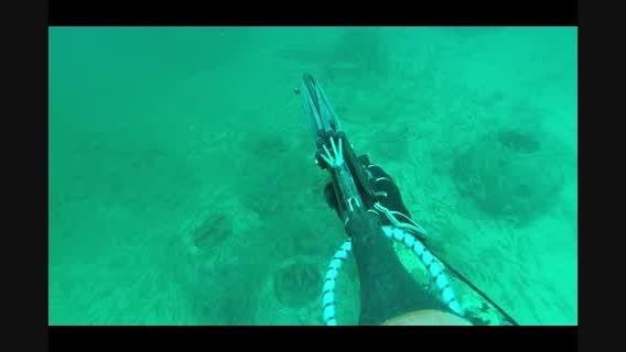 صید ماهی با شکار ماهی باراکودا (کوتر-جت دم زرد) در کیش
