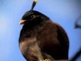 angry birds در دنیای واقعی(فوق العاده هست حتما ببینید)