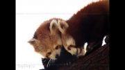 حیوانات ناز و دوست داشتنی(2)