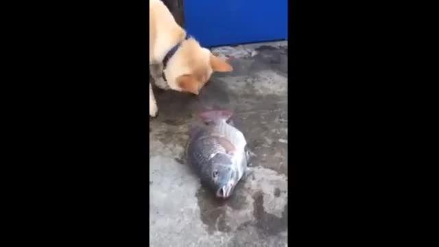 کلیپ جالب آب دادن سگ به ماهی فوق العاده زیبا و جالب