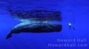 نهنگ غول پیکر