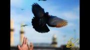 آتش طوفنده-حاج محمود کریمی-ماه مبارک رمضان- مناجات کریمی