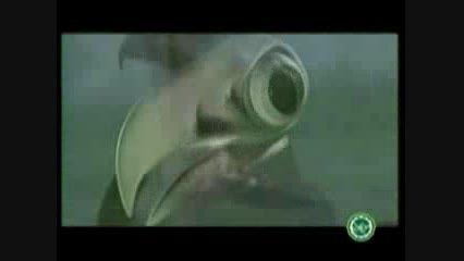 شگفتی های چشم عقاب