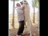 بزرگترین سگهای سرابی ایران