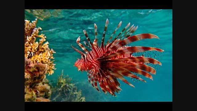 ماهی زیبا ودیدنی!!