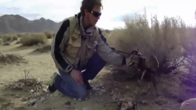 عقاب را ببینید که چه بلایی سر سگ میاره