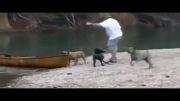 سگ نجات غریق