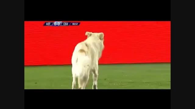 قدم زدن یک سگ وسط فینال مسابقه فوتبال