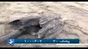 کشتار بی رحمانه پرندگان درمازندران
