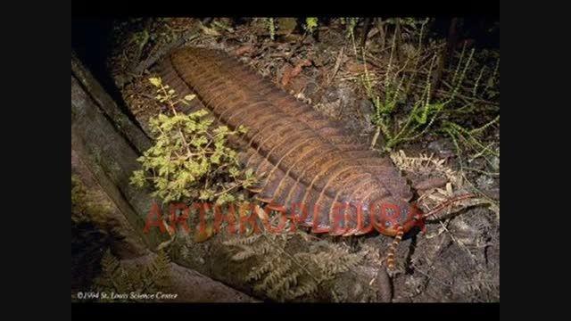 عجیب ترین جانوران ما قبل تاریخ