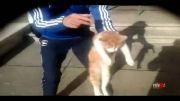 شکنجه بیرحمانه گربه