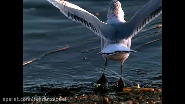 پرواز شگفت انگیز پرندگان