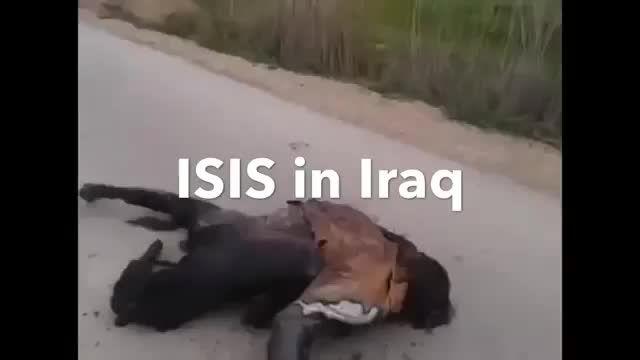 جدید/ قتل عام فجیع داعش در عراق -سوریه