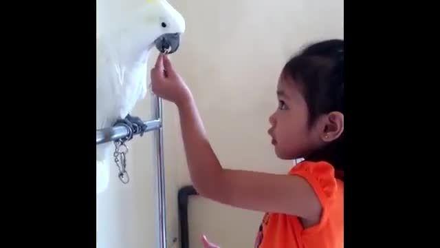 آموزش طوطی سانان توسط دختر 4 ساله