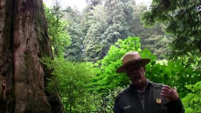 سایبان در جنگل توسط چوب سرخ