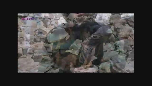 زندگی حیوانات در میدان جنگ-اسلایدشو+فیلم ویدیو کلیپ