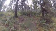 حمله خرس گریزلی به دوچرخه سوارا