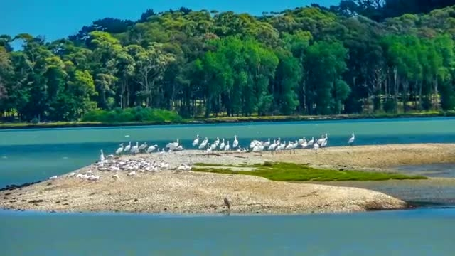 دریا و تالاب با پرندگان مهاجر زیباتر است لطفا ببینید