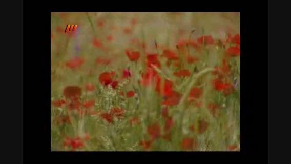 موسیقی بختیاری - رضا صالحی - سوار