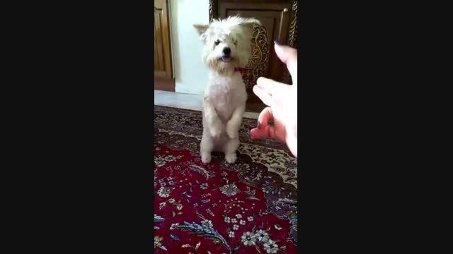 یه کلیپ باحال از مسخره بازی یه سگ ته خنده