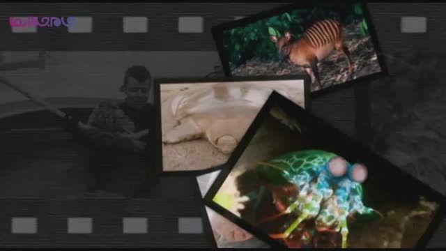 حیوانات نادر زمین+فیلم کلیپ عجیب شگفت جانور#گلچین صفاسا