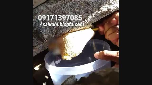 کندوی عسل زنبورهای وحشی- مستند استحصال عسل طبیعی کوهی