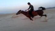 آذرخش اسب دره شوری خالص