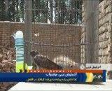 غذا دادن یک پرنده به پرنده گرفتار در قفس