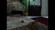 پرش گربه 2 متری