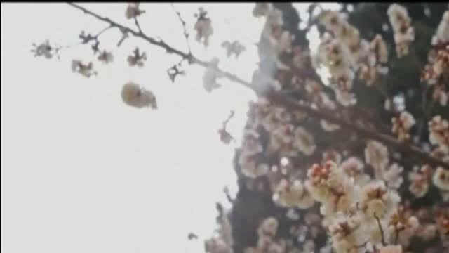 موزیک ویدیو فصل بهار با صدای رضا صادقی و سعید شهروز ...