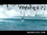 پرش بسیار بامزه پنگوئن ها