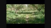 باغ سیب گلاب و گردو (تاکستان قزوین)