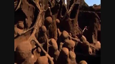 خانه مورچه ها